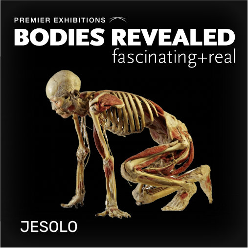 Bodies Revealed